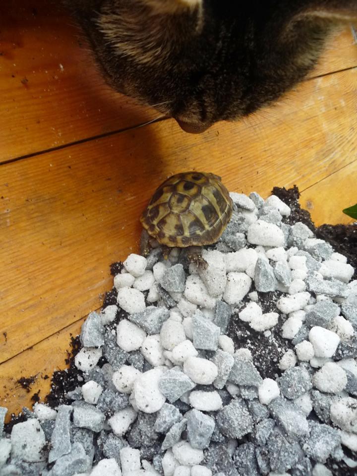 schildkröte bis ganz unten