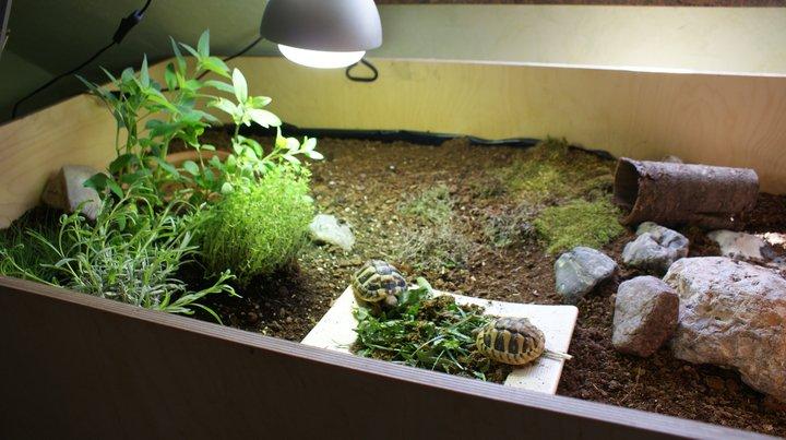 terrarium fr pflanzen simple arten regenwald terrarium pflanzen ableger ranken with terrarium. Black Bedroom Furniture Sets. Home Design Ideas