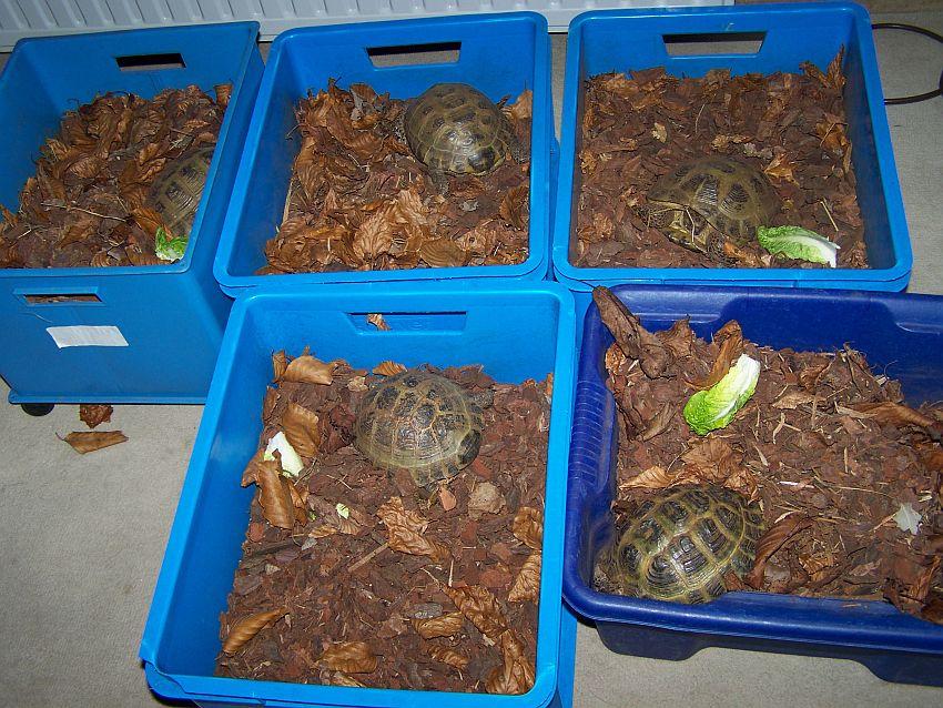 Schildkrötenüberwintern garage u2013 Günstige Küche Mit E Geräten ~ 26155015_Sukkulenten Überwintern Temperatur